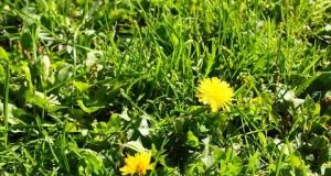 """Tình anh em tuyệt diệu ở """"Tôi thấy hoa vàng trên cỏ xanh"""""""