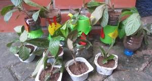 Em học trồng cây