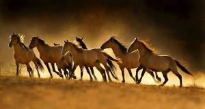Bài ca năm ngựa
