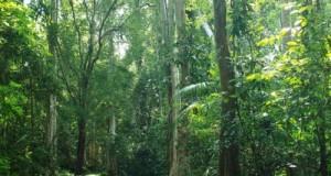 Tài nguyên thiên nhiên – Qúy hay không?