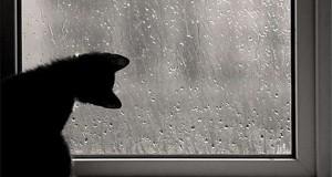 Tôi luôn thích lắng nghe những âm thanh thú vị của mưa