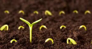 Chơi gieo hạt