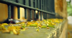 Mùa thu là mùa đẹp nhất trong năm