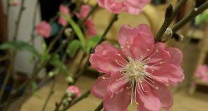 Mùa xuân…