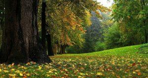 Buổi chiều, cánh rừng đẹp như một bức tranh