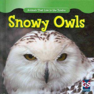 sach-snowy-owls