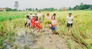 """Hoạt động trải nghiệm tại Bắc Ninh """"Lắng nghe câu chuyện lúa đồng"""""""