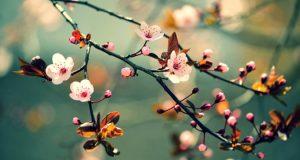 Câu chuyện của mùa xuân