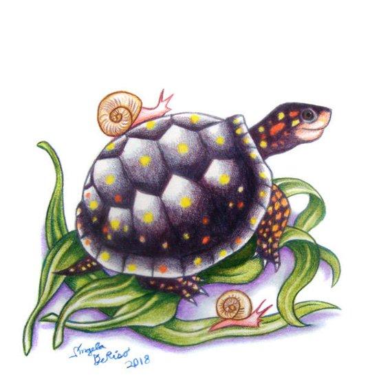 Cuộc đua giữa Rùa và Ốc Sên