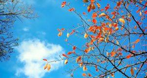 Tình yêu dành cho mùa thu…