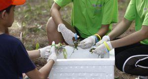 EcoCamp 2020 – Trải nghiệm ủ phân hữu cơ